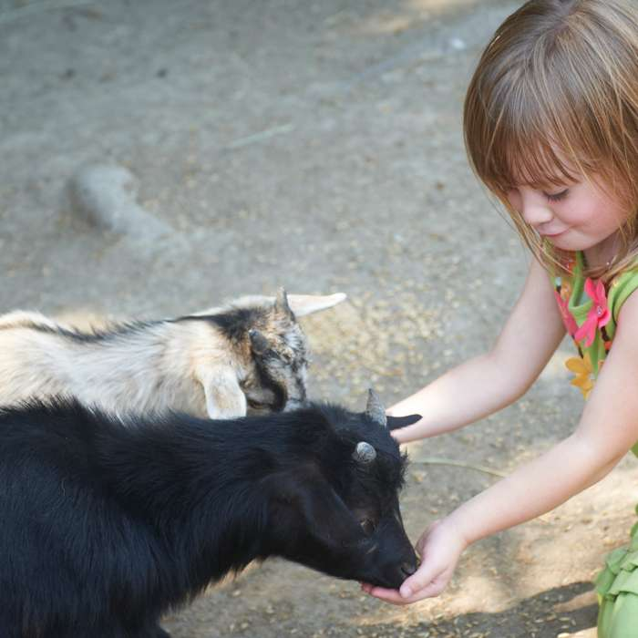 Petting Farm at Stables