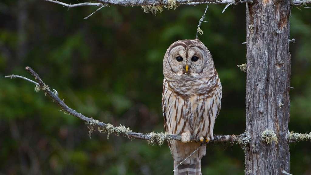 Owl Prowl with Robin Tapley at Deerhurst Resort