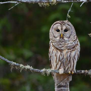 Owl Prowl with Robin Tapley at Deerhurst Resort